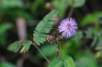 Tiny flower grass