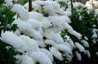 white colours