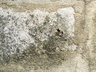 Old concrete texture  wall