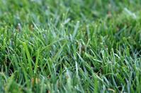 Shallow lawn