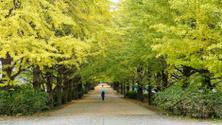 The street nearby Meiji Jingu Gaien
