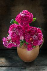 fine pink roses bouquet