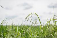 Wild Grass meadow