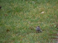 Small bird on ground