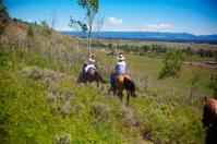 People Trail Riding On Horseback