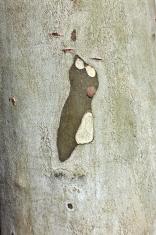 pattern of plane bark