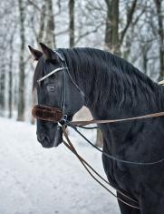 Winter Portrait Of a Horse