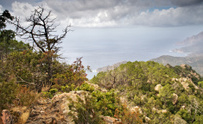 Corsica Wilderness