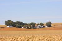 Harvest is Near in Iowa