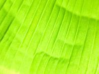 banana leaves texture