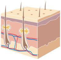 Cross section skin