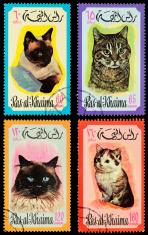 Ajman cat postage stamps (XXXL)