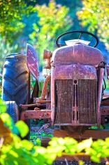 Old Garden Tractor