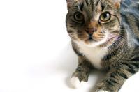 Curios cat