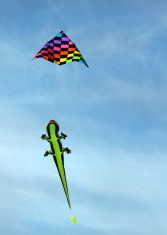 Lizard and kite