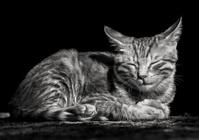 cat black white sleeping