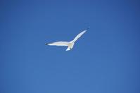 Seagull against blue sky