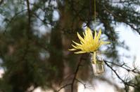 Yellow star flower