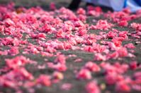 background of frangipani flowers