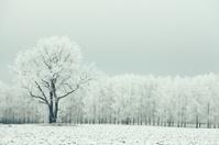 lonely tree in a field frosted frosty winter landscape