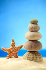 Sea star and sea urchin