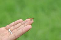 Lady Bug Taking Off !!!