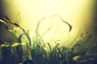 Underwater garden in bright sunlight