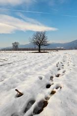 snowfally