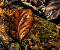Old brown leaf