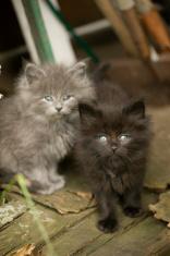 Tiny sister kittens