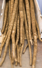 Great Burdock Roots