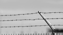 grayscale barbed wire fence