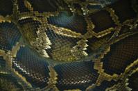 python snake skin and scales pattern macro