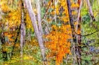 Abstract Autumn Reflection