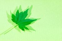 Green Leaf on Paper