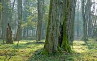 Springtime at old natural forest