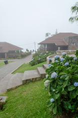 Misty Unique House in a Garden