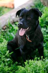 Black dog on the grass
