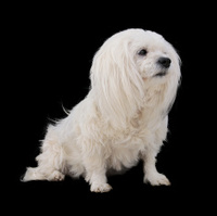 Adorable Mixed Breed Dog