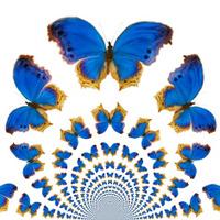 Kaleidoscopic Butterflies
