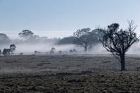 Australian Landscape during early sun