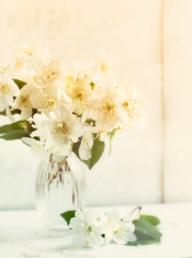 Jasmine flowers in a glass vase