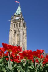 Parliament Tulips - 02