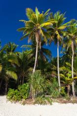 Coconut palm trees on tropical beach, Boracay