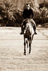 Horse Riding. Paddock. Vintage toned.