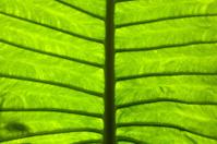 macro in leaf