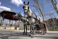 Horse-driven cab