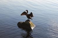 Confident Duck