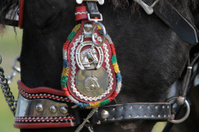 Bridles for horses