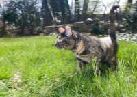 Cat Prowls the Backyard